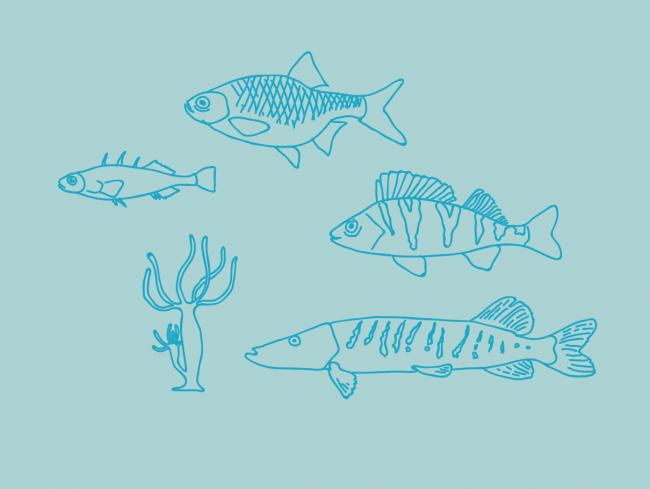 illustratie-vissen-voedselweb